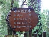 桃園上巴陵拉拉山 (達觀山) 2009/11/26 :P1050593.jpg