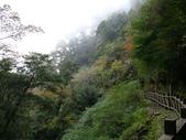 桃園上巴陵拉拉山 (達觀山) 2009/11/26 :P1050531.JPG