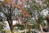 2014楓石門 野餐日 (桃園石門水庫 南苑公園) 2014/12/13:IMG_9695.jpg
