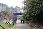 新竹公園 河津櫻 花開繽紛添新色 2017/02/23:IMG_0724.jpg