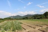 桃園大溪中新里韭菜花田 2013/09/17 :IMG_8322.jpg
