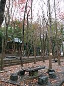 桃園市虎頭山公園整修完成+楓香紅了 2011/01/13:P1110963.JPG