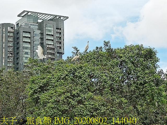 IMG_20200802_144040.jpg - 台北市大安森林公園 20200802