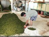 台式綠茶製作 2 - 揉捻成型 (包布球.平揉.解塊):P1100651.JPG