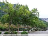 楓葉紅了@桃園石門水庫南苑停車場坪林公園:P1030417.jpg