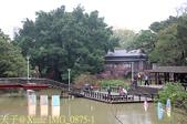 新竹公園 河津櫻 花開繽紛添新色 2017/02/23:IMG_0875-1.jpg