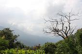 寶山拿普原生茶有機茶園  20201017:IMG_1210.jpg