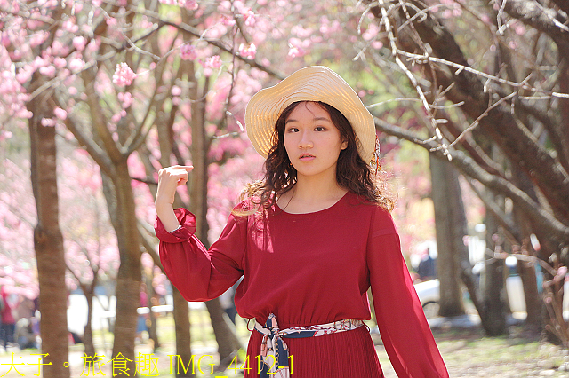 2021年 武陵農場 山櫻花、紅粉佳人 繽紛綻放 20210214:IMG_4412-1.jpg