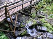 桃園上巴陵拉拉山 (達觀山) 2009/11/26 :P1050579.JPG