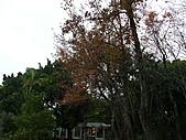 桃園市虎頭山公園整修完成+楓香紅了 2011/01/13:P1110968.JPG