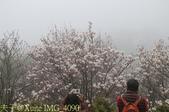 淡水楓樹湖古道木蘭花辛夷 20150225 :IMG_4090.jpg