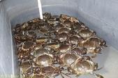 澳洲 Catch-A-Crab 黃金海岸翠德 (Tweed) 河捕蟹探險之旅 2013/02/07:IMG_7562.jpg