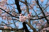 新北市三芝群櫻紛飛漫步行 - 三生步道 20140228 :IMG_8917.jpg