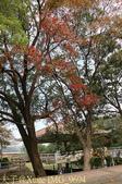 2014楓石門 野餐日 (桃園石門水庫 南苑公園) 2014/12/13:IMG_9694.jpg