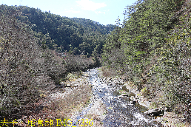 2021年 武陵農場 山櫻花、紅粉佳人 繽紛綻放 20210214:IMG_4336.jpg