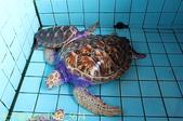 泰國攀牙海龜生態保育中心 20160207:IMG_5674.jpg