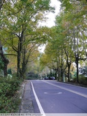 石門水庫溪洲公園 楓紅+落羽松 2011/12/28 :P1030300.jpg