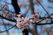 新北市三芝群櫻紛飛漫步行 - 三生步道 20140228 :IMG_8918.jpg