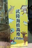 2021年 武陵農場 山櫻花、紅粉佳人 繽紛綻放 20210214:IMG_4575.jpg