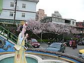 淡水無極天元宮, 櫻花開了!  2011/03/08 17:00 天氣: 陰:P1010401.JPG