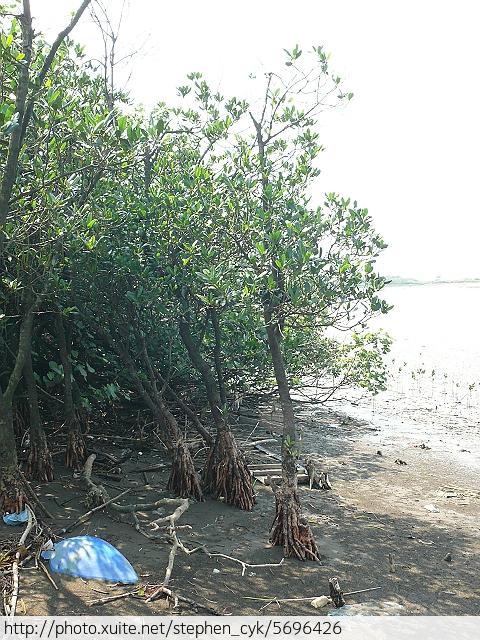 新北市八里左岸.挖子尾自然保留區.觀海長堤:P1070991.jpg