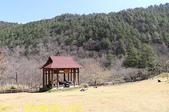 2021年 武陵農場 山櫻花、紅粉佳人 繽紛綻放 20210214:IMG_4393.jpg
