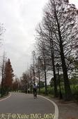 桃園 大溪 石園路558巷 落羽松 2015/01/06:IMG_0676.jpg