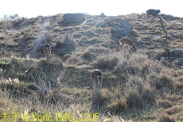 IMG_1205.jpg - 可愛的梅花鹿在大坵島等你 20171021