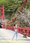 巴陵橋假日廣場 20190330:IMG_6452-1.jpg