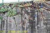 嘉義新港鄉板頭村 古笨港戶外考古園區 剪黏大壁畫 20200808:IMG_6968.jpg