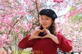 2021年 武陵農場 山櫻花、紅粉佳人 繽紛綻放 20210214:IMG_4703-1.jpg