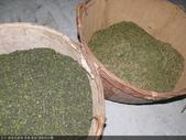 撿茶及篩茶-茶葉.茶枝.茶粉的分離:P1100732.JPG