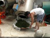 台式綠茶製作 2 - 揉捻成型 (包布球.平揉.解塊):P1100694.JPG