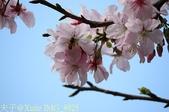 新北市三芝群櫻紛飛漫步行 - 三生步道 20140228 :IMG_8925.jpg