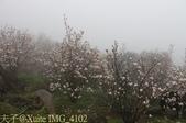 淡水楓樹湖古道木蘭花辛夷 20150225 :IMG_4102.jpg