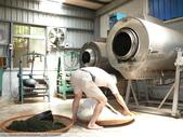 翠玉烏龍茶製作 3 - 揉捻成型 :P1090994.JPG