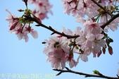 新北市三芝群櫻紛飛漫步行 - 三生步道 20140228 :IMG_8927.jpg