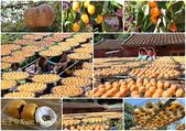 金漢杮餅教育農園 20151017:金漢柿餅 page.jpg