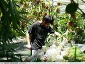 食蟲植物-宜蘭波的農場 2010/08/26:P1090335.JPG