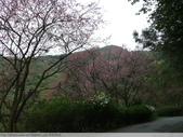汐止彌勒山天道清修院 2011/03/14 :P1010718.JPG
