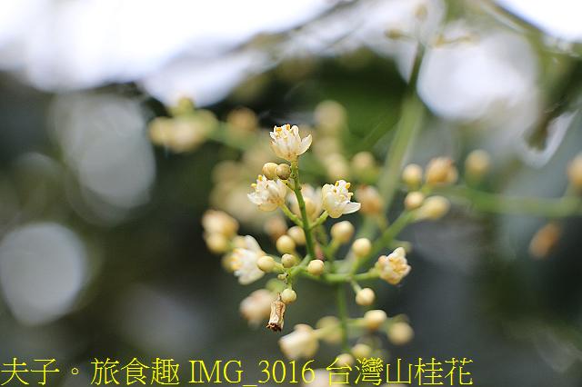 IMG_3016 台灣山桂花.jpg - 宜蘭礁溪 抹茶山 20200410