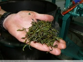 桃映紅茶製作初體驗 2010/08/29 :P1090594.JPG