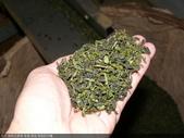 撿茶及篩茶-茶葉.茶枝.茶粉的分離:P1100709.JPG