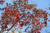 2014楓石門 野餐日 (桃園石門水庫 南苑公園) 2014/12/13:IMG_9794.jpg