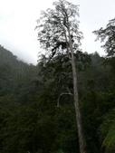 桃園上巴陵拉拉山 (達觀山) 2009/11/26 :P1050542.JPG