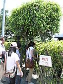 2011/04/24 花博倒數第二天, 最後的一個週日, 天氣晴, 人人山人海:P1020516.JPG