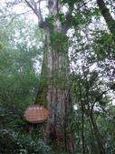 桃園上巴陵拉拉山 (達觀山) 2009/11/26 :P1050580.JPG
