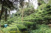 寶山拿普原生茶有機茶園  20201017:IMG_1184.jpg