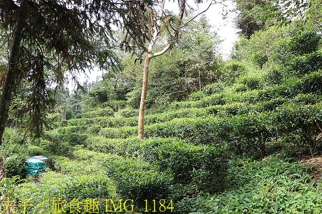 IMG_1184.jpg - 寶山拿普原生茶有機茶園 20201017