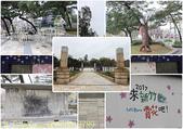 新竹公園 河津櫻 花開繽紛添新色 2017/02/23:06586012789.jpg